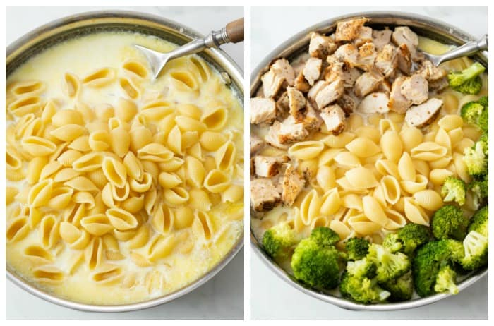 Pasta shells in an alfredo sauce with chicken and broccoli