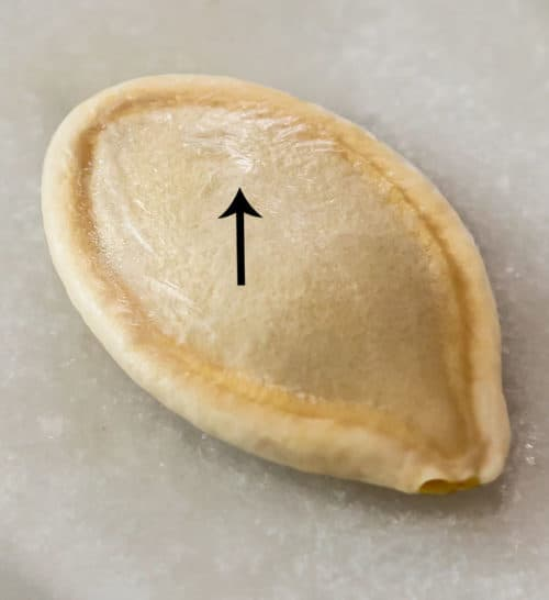 A close up view of a pumpkin seed with an arrow pointing to the membrane.
